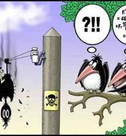 The Most Foolish Bird