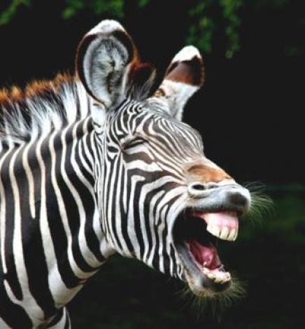 The Zebra Question